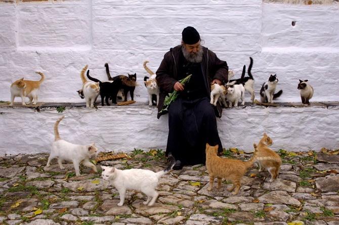 Священнослужитель и кошки